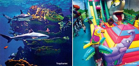 great barrier reef dyreliv